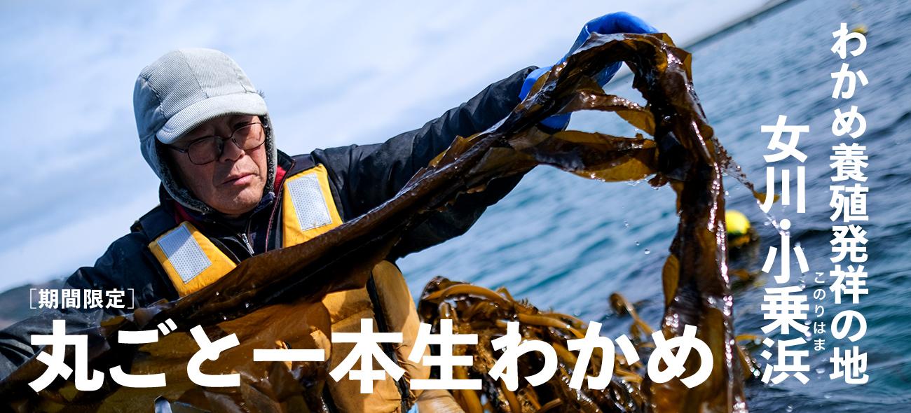slider_namawakame.jpg
